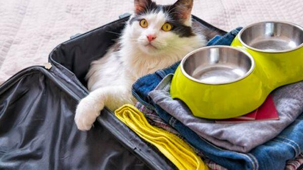 Cosa portare con sé durante una gita con il pet: ecco un kit a prova di gatto