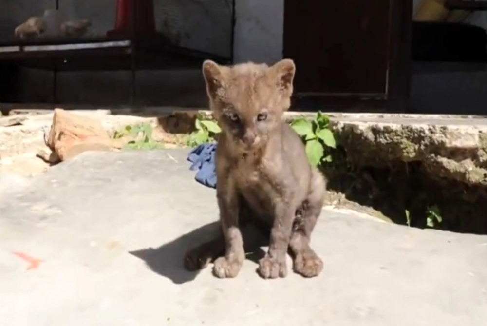 Trova un cucciolo di gatto abbandonato per strada e lo adotta: poi scopre che non è un gatto