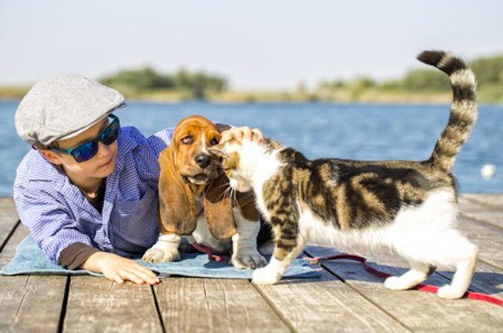 I migliori alloggi per cani e gatti quando siamo in vacanza