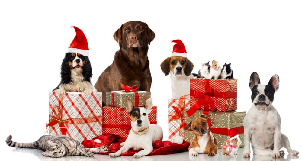 Animali Natale Immagini.Regali Di Natale Per Animali Domestici