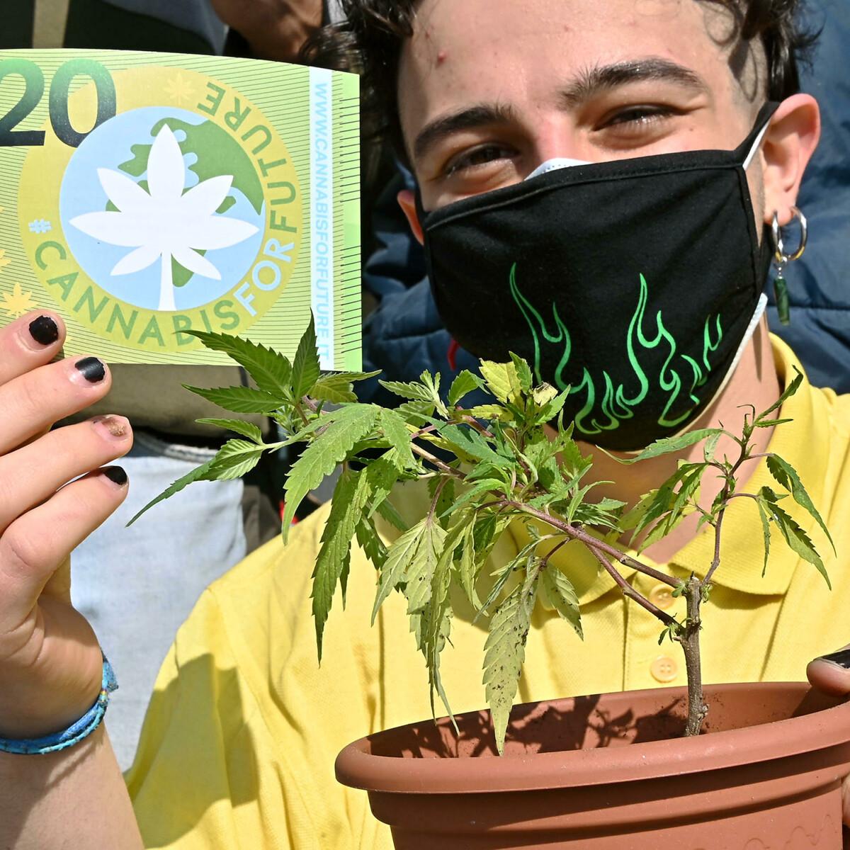 Il primo Paese Ue a legalizzare la coltivazione (e l'uso) della cannabis a casa