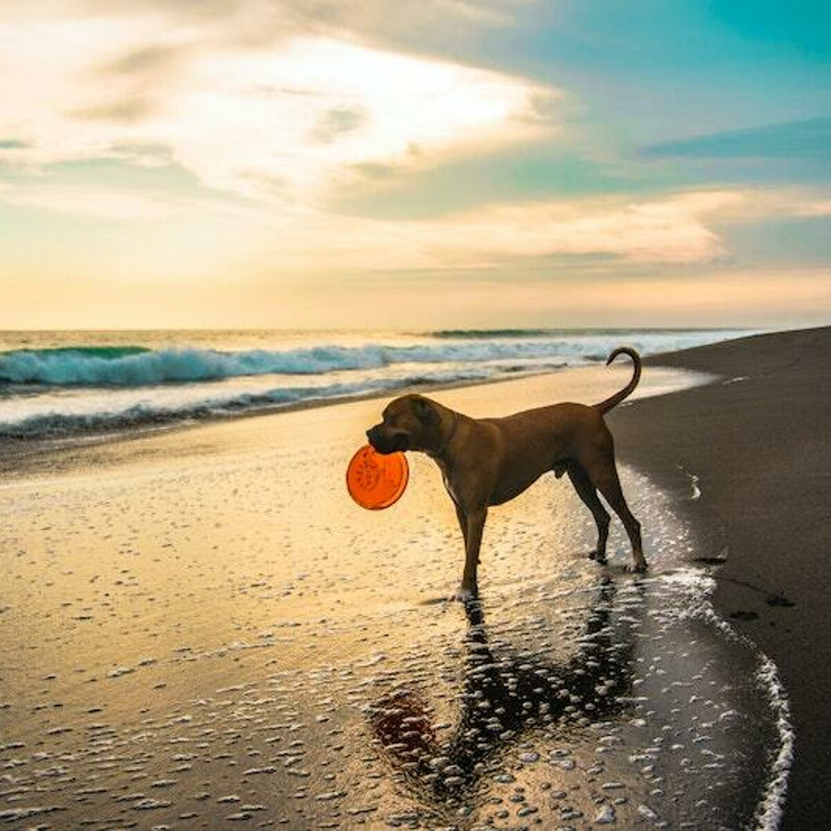 Vacanze al mare con il cane: le regole da rispettare e le spiagge dog friendly