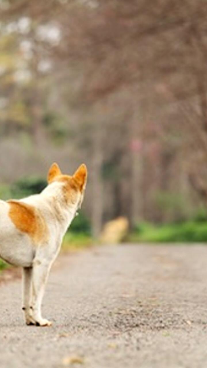 Il triste fenomeno dell'abbandono dei cani da caccia